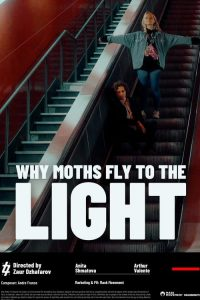 why moths fly to the light